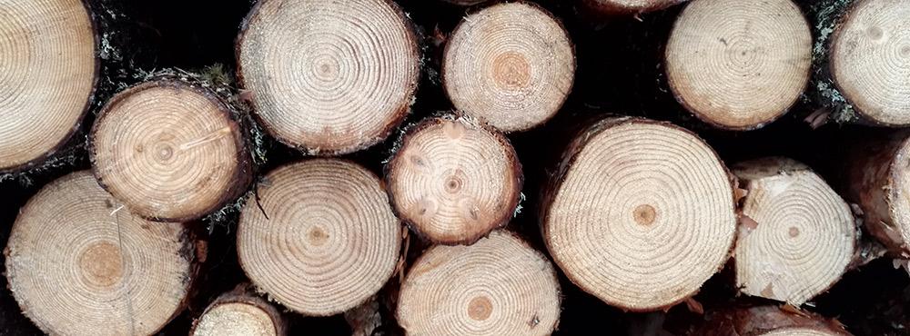 Puukauppa